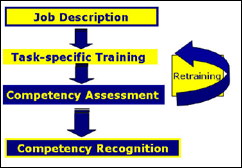 Job Description -> Task-specific Training -> Competency Assessment -> Competency Recognition